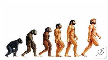 Human Evolution: Darwin's Theory